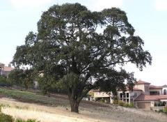 Residential Tree Care, PLacerville